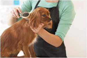 An Overview of Dog Grooming Clippers