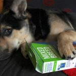 Best Dog DNA Tests for Mixed Breeds