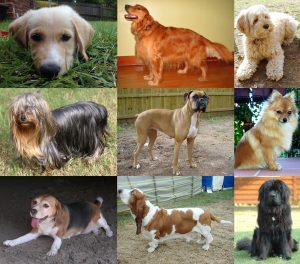 Collage_of_Nine_Dogs-2